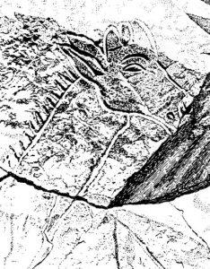 Голова жирафы (фрагмент). Петроглиф. Матенду, Феццан, Ливия