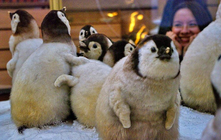 музей арктики и антарктики спб
