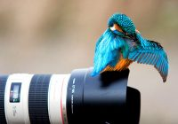 Глоссарий по фотоискусству